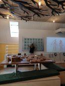 viking museum 4
